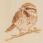 WEB-Sparrow-Portrait-s