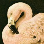 WEB-catemcc-pinkflamingo-s